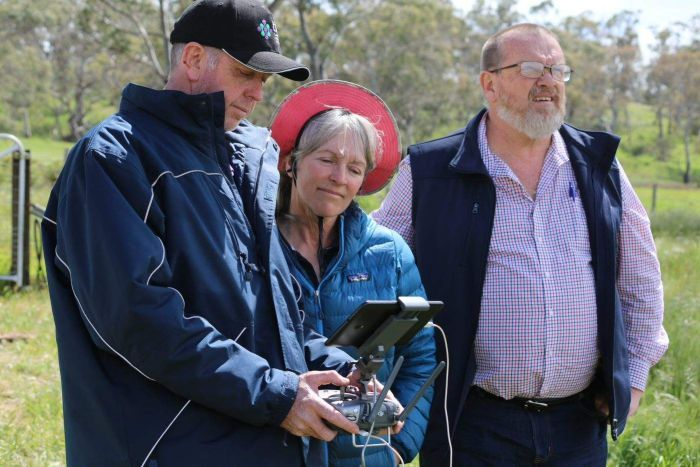 Rae Young (centre) watches as the drone is used over her sheep.