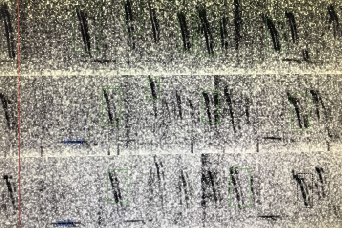 Spectrogram of Antarctic blue whale calls.
