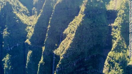 View from the drone of the cliff where the plant was rediscovered.