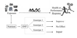 Figure from Sport Nutrigenomics Review article in Frontiers in Nutrition