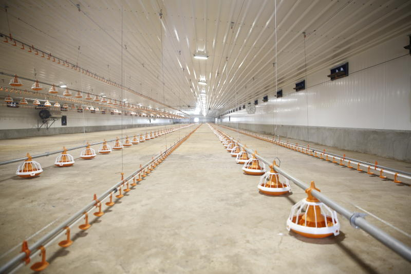 Technologies That Will Define The Future Of Poultry