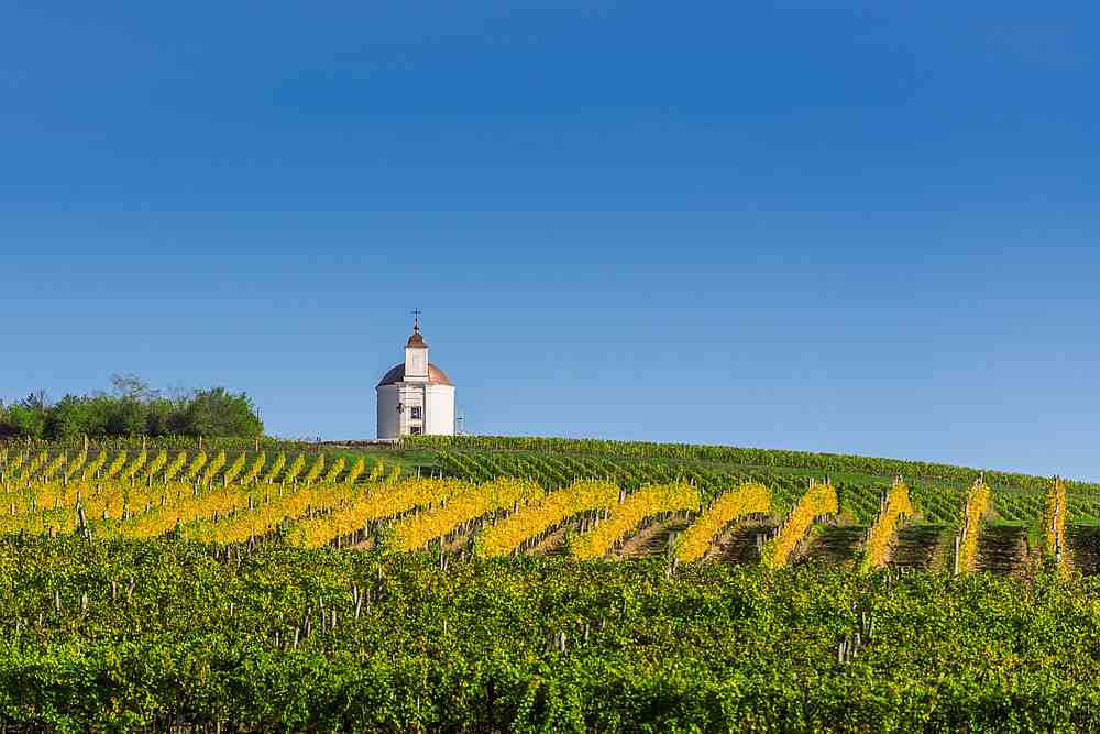 A wine producer in Luxembourg uses a drone to spray fungicide over rows of vines. — gehringj/IStock.com pic via AFP